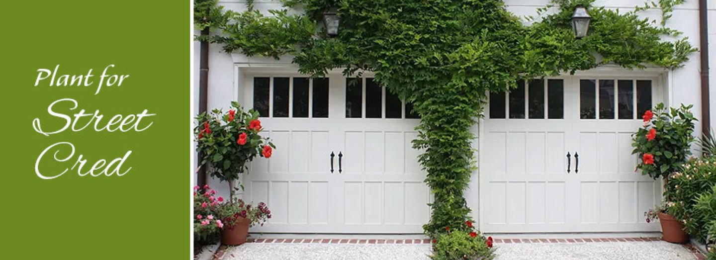10 Planting Ideas to Boost the Curb Appeal of your Garage