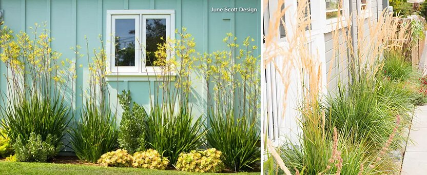 Planting Ideas To Boost The Curb Eal